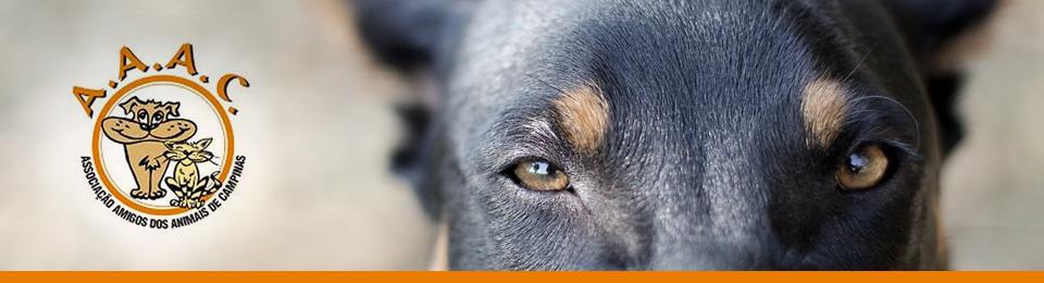 Adoção de Animais | ONG AAAC Campinas